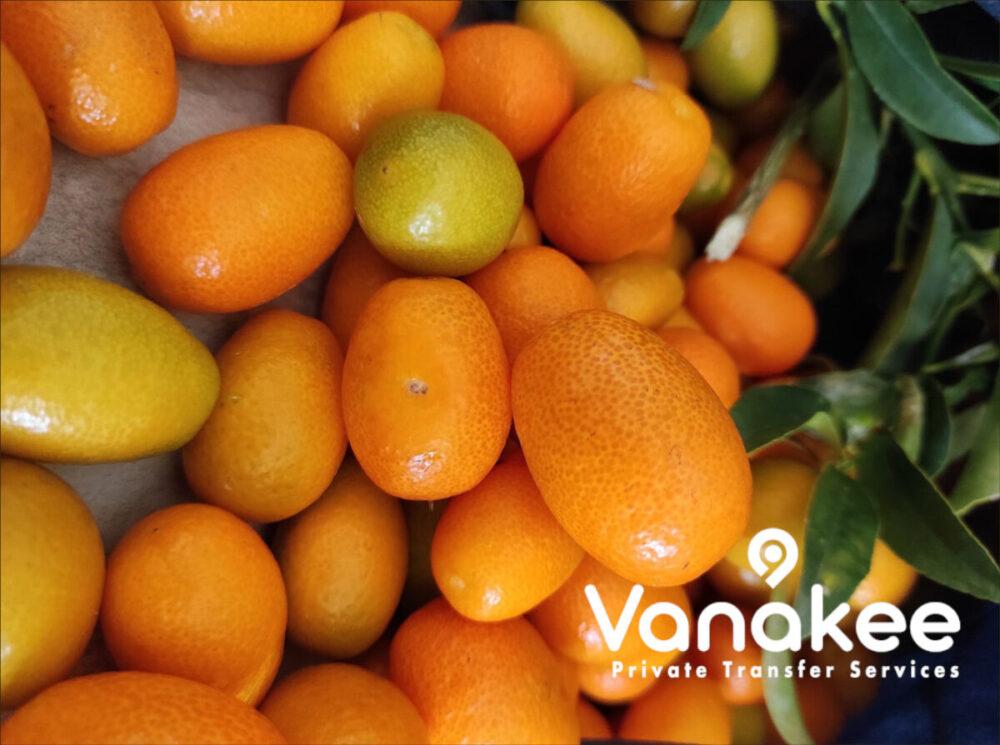 kumquat corfu